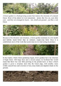 Page 2 of Reforesting Scotland's Forest Gardening display