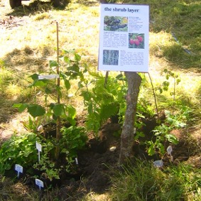 Reforesting Scotland's Forest Gardening display at the Big Tent Festival 2012